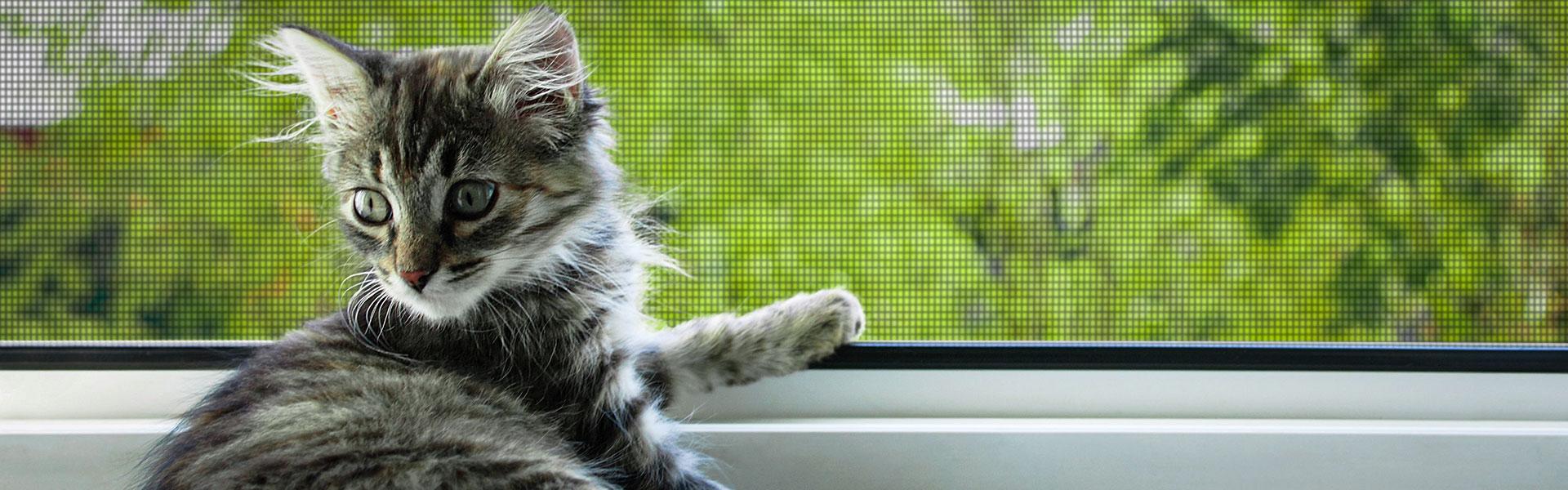 fliegengitter katzensicher